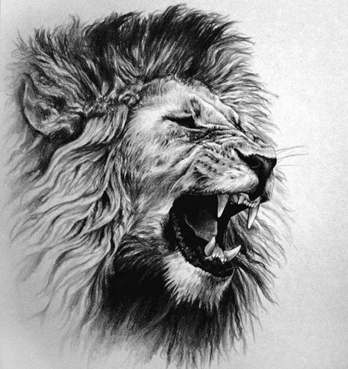 Lion Tattoo Drawing